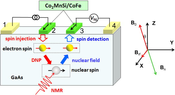 Electrical detection of nuclear spin-echo signals in an electron