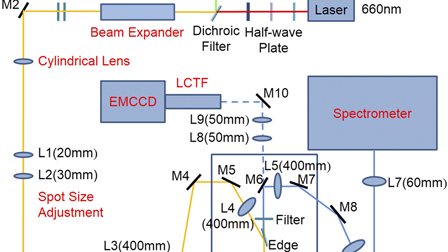 Dynamic Raman imaging system with high spatial and temporal