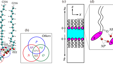 Molecular dynamics study of structure and vibrational spectra at