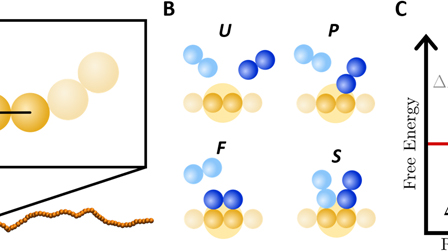 Force-extension behavior of DNA in the presence of DNA