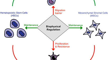 Perspective: Biophysical regulation of cancerous and normal