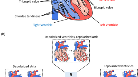 Invited Article: Emerging soft bioelectronics for cardiac health