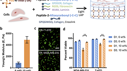 Tunable synthetic extracellular matrices to investigate ... on