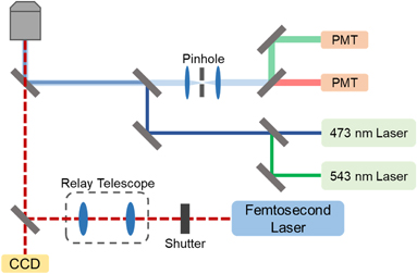 Accurate manipulation of optogenetic proteins with