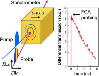Intrinsic shape of free carrier absorption spectra in 4H-SiC