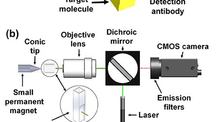 Magnetically aggregated biosensors for sensitive detection