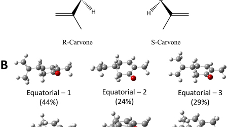 A dynamical (e,2e) investigation into the ionization of the outermost orbitals of R-carvone