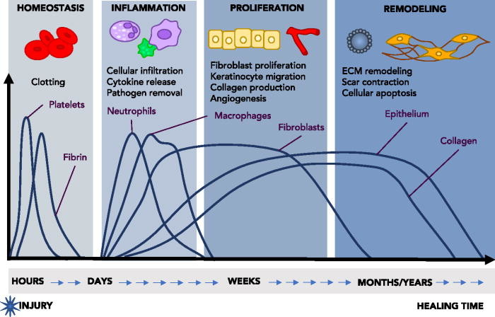 Review: Multimodal bioactive material approaches for wound healing