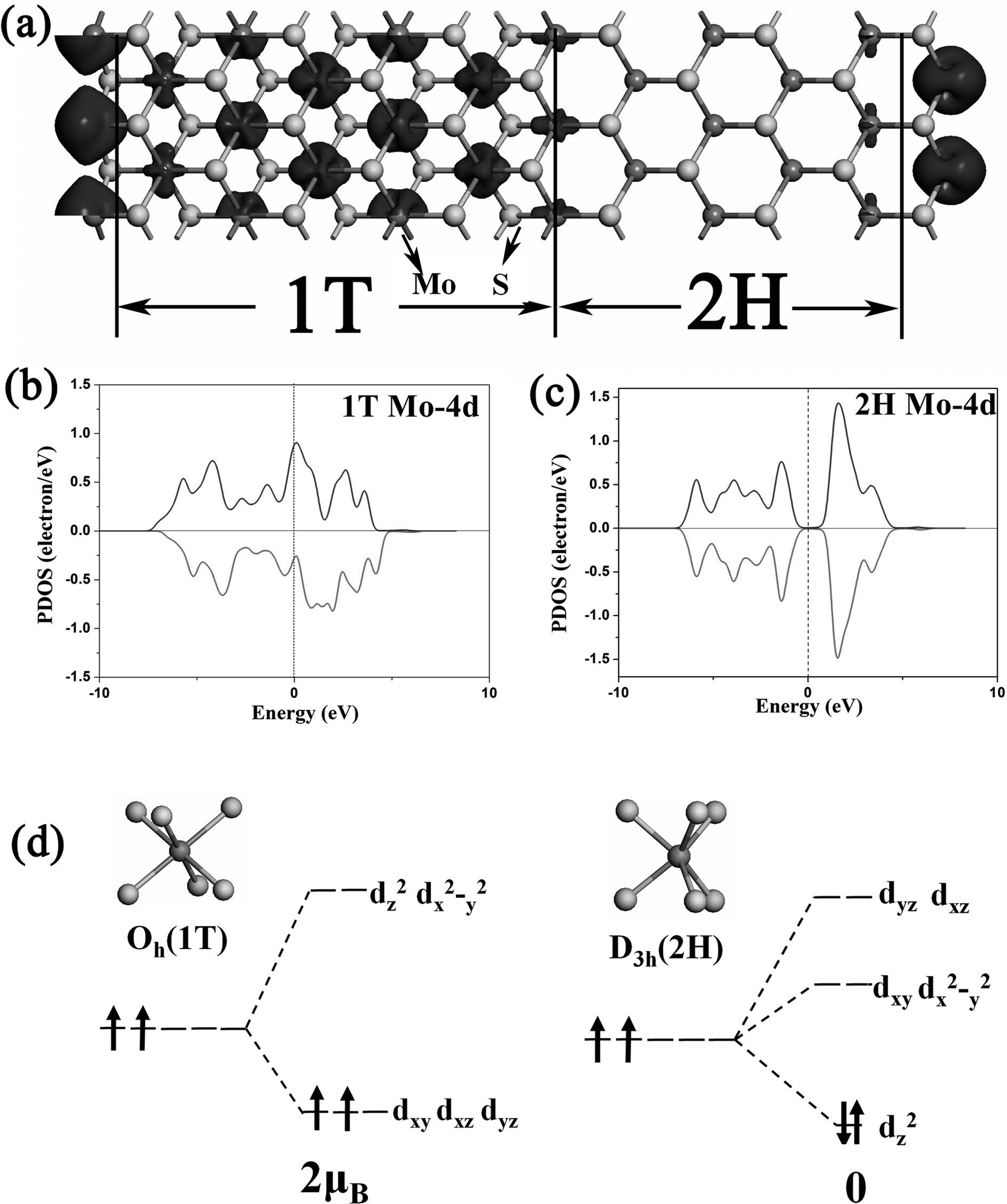 Enhancement of magnetism by structural phase transition in MoS2